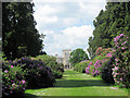 SP9911 : Rhododendrons on the Wellontonia Avenue, Ashridge House by Chris Reynolds