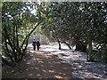 SP2054 : Victorian evergreens, Avonbank Gardens by Robin Stott