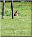 NZ3069 : Red Deer by Christine Westerback