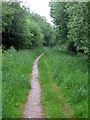 SP7241 : Bridleway through Wicken Wood by Philip Jeffrey
