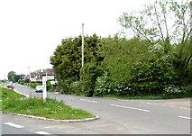 TQ8115 : Moor Road, Westfield, East Sussex by nick macneill
