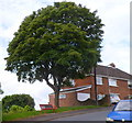 ST3288 : Bench with its back to a view, Upper Tennyson Road, Newport by Jaggery