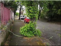 SX9065 : Fallen branches, Parkhurst Road, Torre by Derek Harper