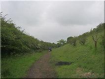 NZ3534 : Footpath in disused railway cutting by peter robinson