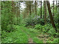 SK3063 : Forest path, Farley Moor by Andrew Hill