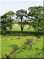 NT1267 : A burn near Kirknewton by Richard Webb