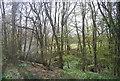 TQ8932 : Ratsbury Wood and Tilder Gill by N Chadwick