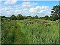 SU1586 : Pickard's Small Field, Gorse Hill, Swindon (1) by Brian Robert Marshall