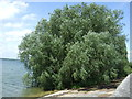 TL1667 : Trees beside Grafham Water by JThomas