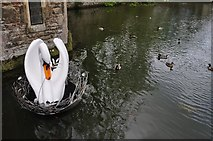 ST5545 : Wells : Bishops Palace - Moat & Swan by Lewis Clarke