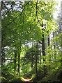 SX8362 : East Hill Wood by Derek Harper