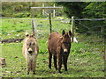 G7378 : Two Donkeys, Donegal by Willie Duffin