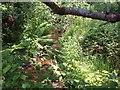SX6890 : Stream near Well Farm by Derek Harper