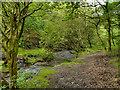 SD9801 : Staly Brook, Castle Clough by David Dixon