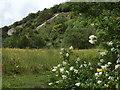 TQ1951 : Wild Flowers, Brockham Quarry by Colin Smith