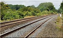 J1461 : Railway at Drumbane near Moira by Albert Bridge