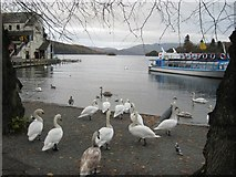SD4096 : Swans on the shore of Windermere by Graham Robson