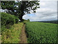 SO5187 : Path between Munslow and Aston Munslow by Dave Croker