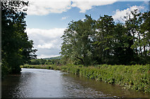 SU9946 : River Wey by Ian Capper