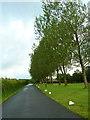 SD7756 : Road to Crowtrees Caravan Park by Alexander P Kapp