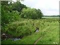 NY7585 : Field and stream near Ridley Stokoe Farm by Oliver Dixon
