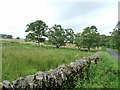 NY7984 : Fields below High Carriteth Farm by Oliver Dixon