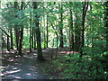 H1495 : Drumboe woods, Ballybofey by Willie Duffin