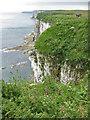 TA1974 : Bempton Cliffs from the coast path by Pauline E