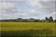 SU5894 : Barley field beside the bypass by Bill Nicholls