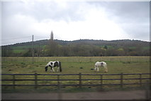 TQ0147 : Horses by the North Downs Line by N Chadwick