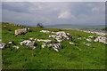 SD7776 : Sheep and limestone rocks by Ian Taylor