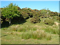 SX6679 : Moorland edge near Merripit by Derek Harper