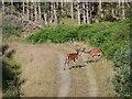 NR9087 : Red deer stags by Patrick Mackie