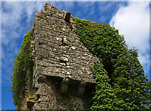 S2653 : Castles of Munster: Mellison (detail), Tipperary (2) by Mike Searle