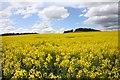 SU5484 : Field of rape on Riddle Hill by Steve Daniels