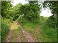 SY0788 : Green lane junction, Naps Lane by Derek Harper
