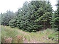 NT0897 : Track in Blackhill Wood by Richard Webb