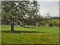 TQ3308 : Tree in Stanmer Park by Paul Gillett