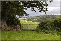 SX1061 : Sheep through the gate by Bill Harrison