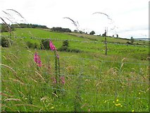 H2079 : Crillys Hill Townland by Kenneth  Allen