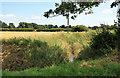 SE9030 : A narrow drain by Peter Church