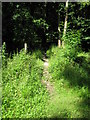 SU8086 : Entrance to shady path in Homefield Wood by don cload