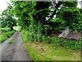 H5415 : Road at Barragh by Kenneth  Allen