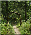 SD3293 : 'The Living Wood', a Grizedale Forest sculpture by Karl and Ali