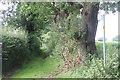SJ8174 : Bridlepath off Peover Lane by Peter Turner