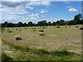 SJ7817 : Proper, old-style hay bales by Richard Law