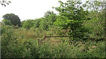 G8232 : Wetland, Kilcoosy by Richard Webb