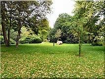 SJ8588 : Cheadle Green by Gerald England