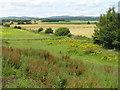 NO3547 : Farmland at Dunkenny by M J Richardson