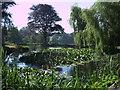 ST3509 : Lake, Avishays, near Chaffcombe by Vieve Forward